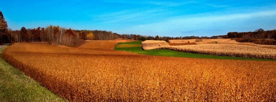 Harvest Vista